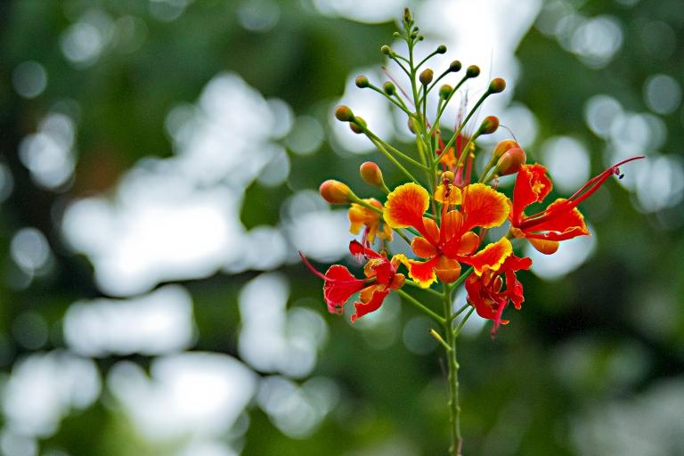 FlowerInIndia