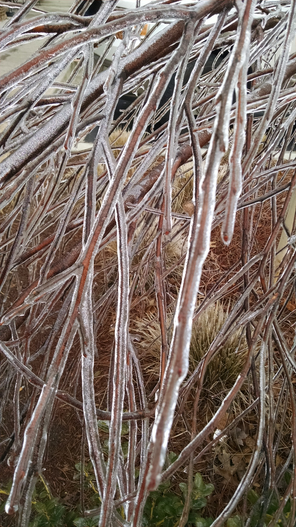Ice shrouded branches, Cumming, GA 2/17/2015