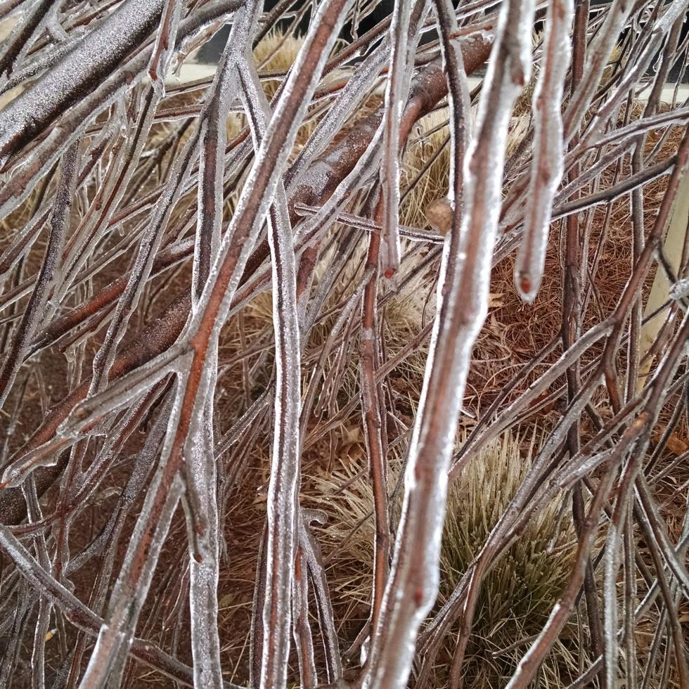Ice shrouded branches, Cumming, GA 2/17/2015